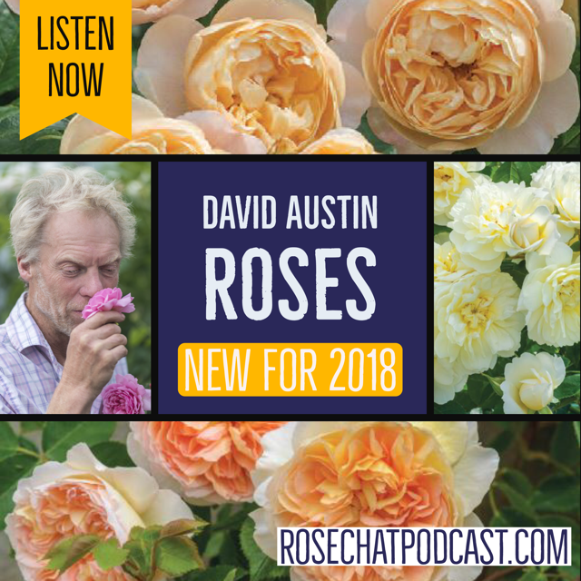David Austin Roses | New Intros for 2018