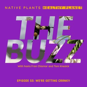The Buzz - We're Getting Cranky