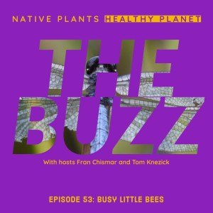 The Buzz - Busy Little Bees