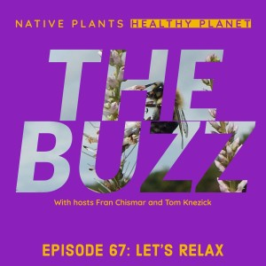 The Buzz - Let's Relax