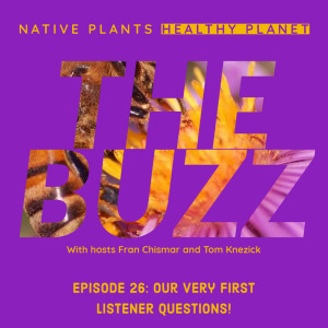 The Buzz - Our Very First Listeners Questions!