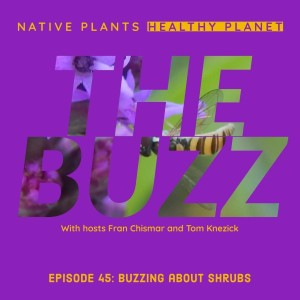 The Buzz - Buzzing about Shrubs