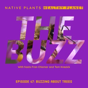The Buzz - Buzzing About Trees