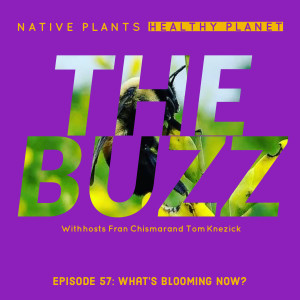 The Buzz - What's Blooming Now?