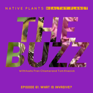 The Buzz - What is Invasive?