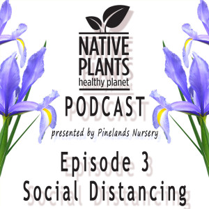The Buzz - Social Distancing