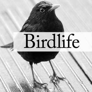 BIRDLIFE - A Poetry Project