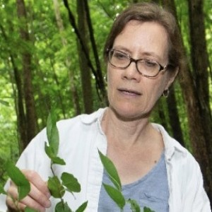 The Curious Case of the Prickly Callery Pear: Interview with Theresa Culley