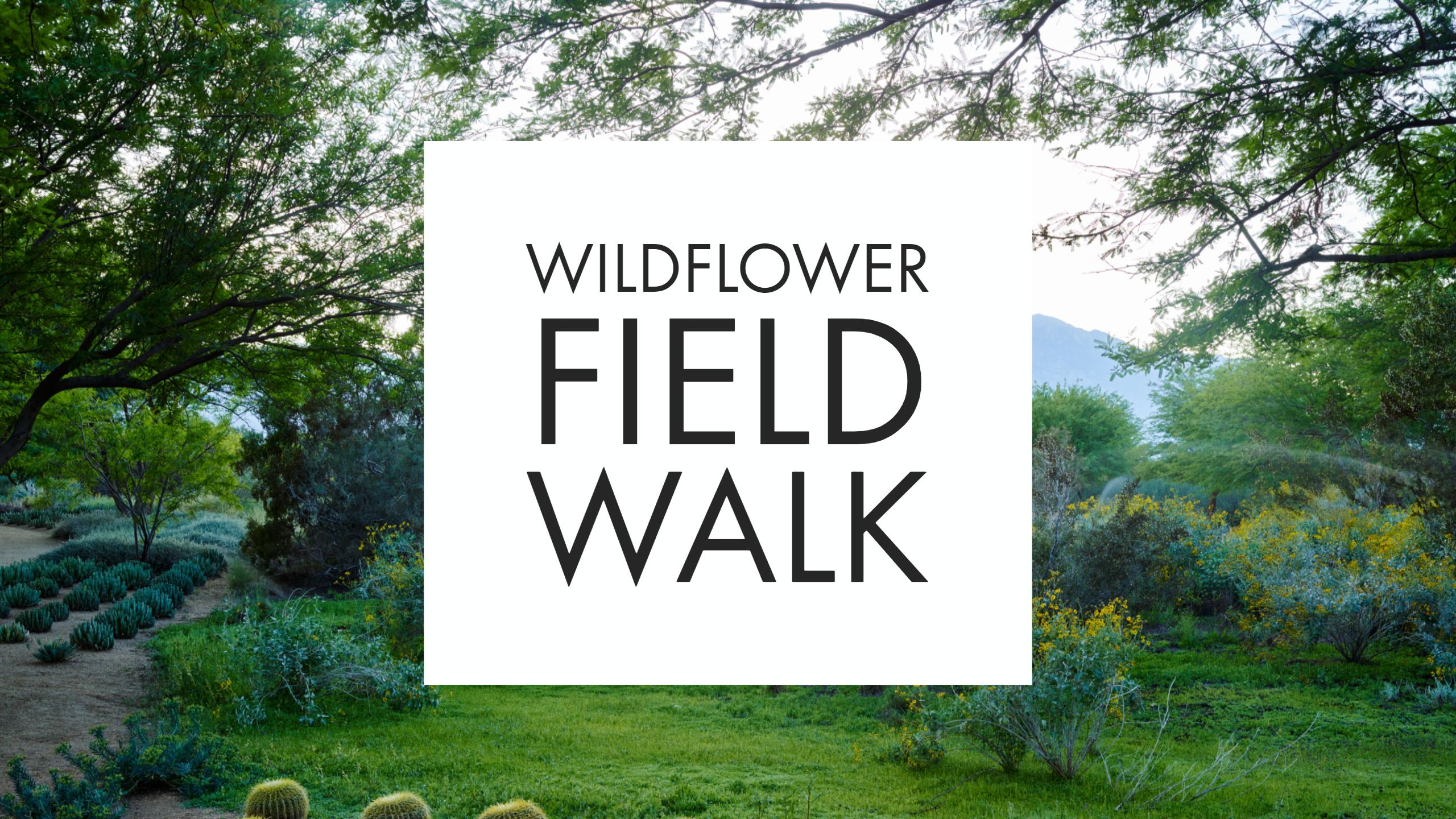 Wildflower Field Walk