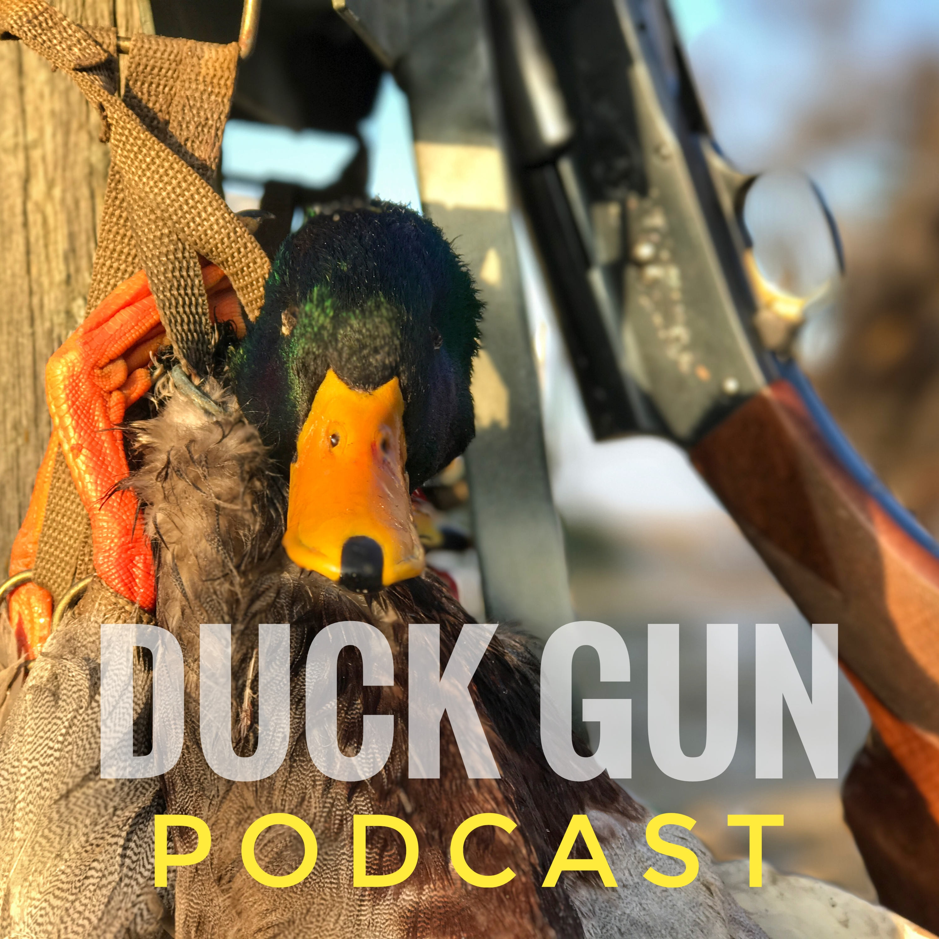 Everything You NEED to know to DUCK HUNT! - You ask, we answer! 2021