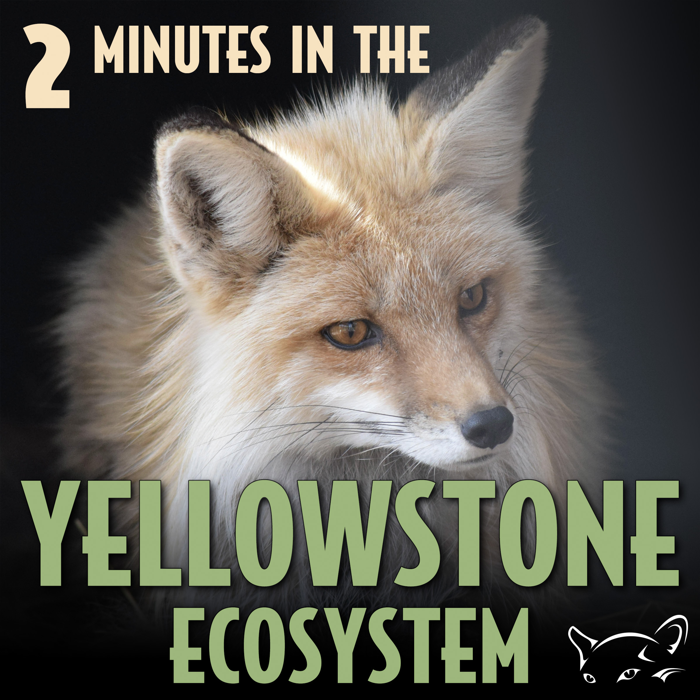 2 Minutes in the Yellowstone Ecosystem