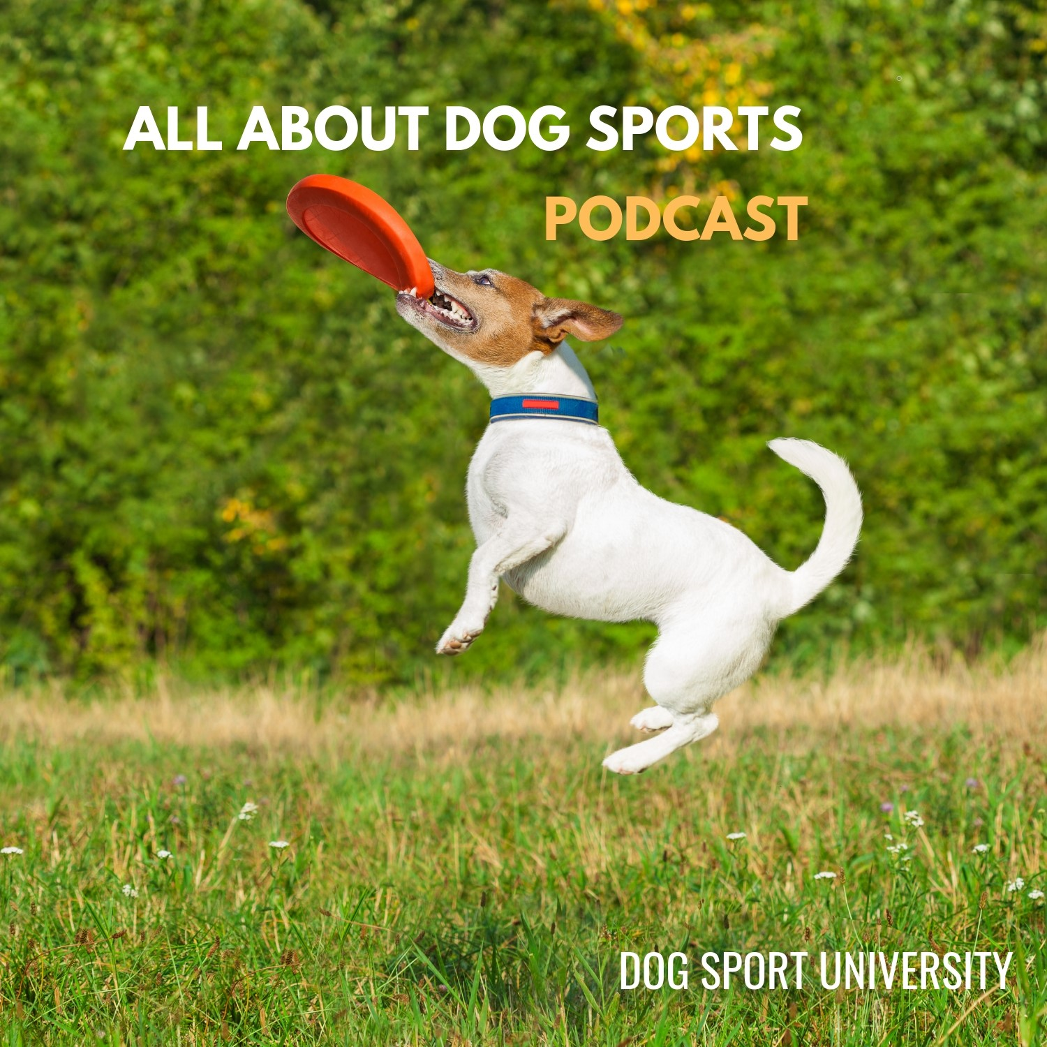 All About Dog Sports Podcast