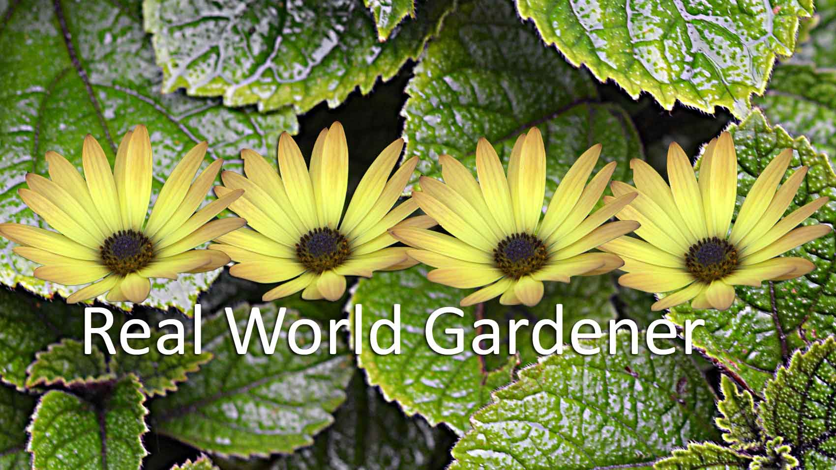 Real World Gardener Summer Garden in The Good Earth