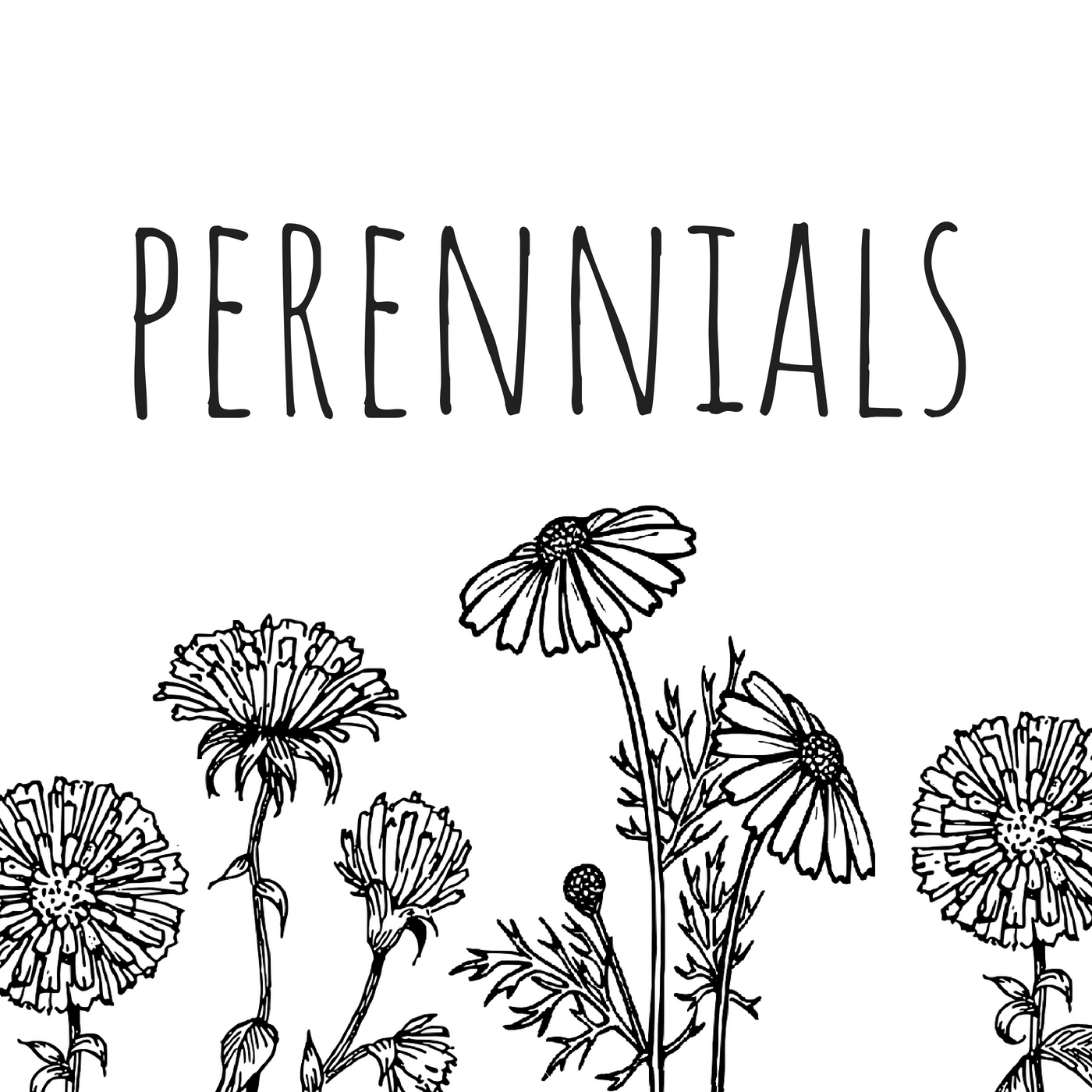 Perennials Podcast