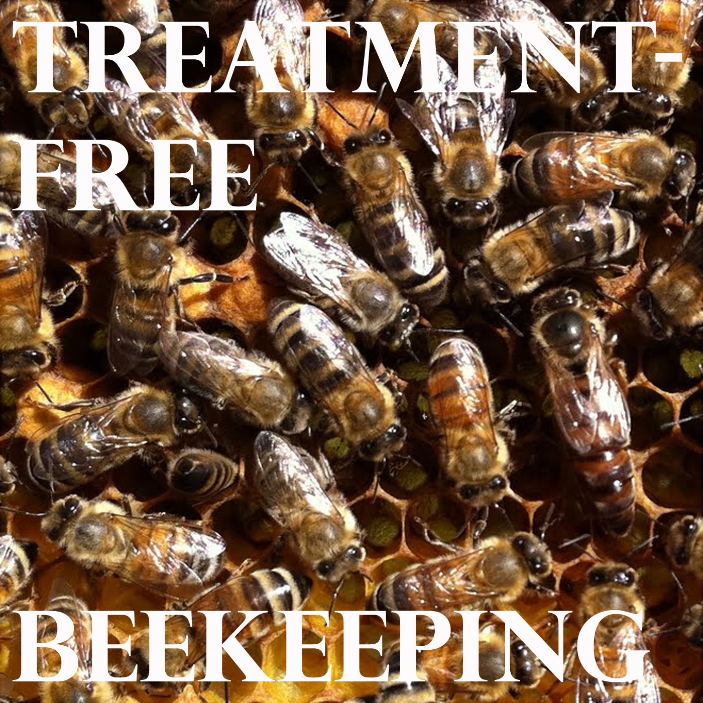 Treatment-Free Beekeeping Podcast - Episode 30 - Roger in Los Altos