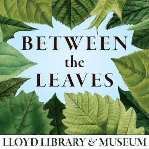 Between the Leaves at the Lloyd