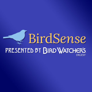 BirdSense:  A Podcast by Bird Watcher's Digest